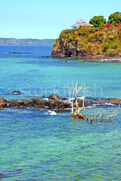 красивой пляж морские водоросли мертвых деревьев рок индийской Сток-фото © lkpro