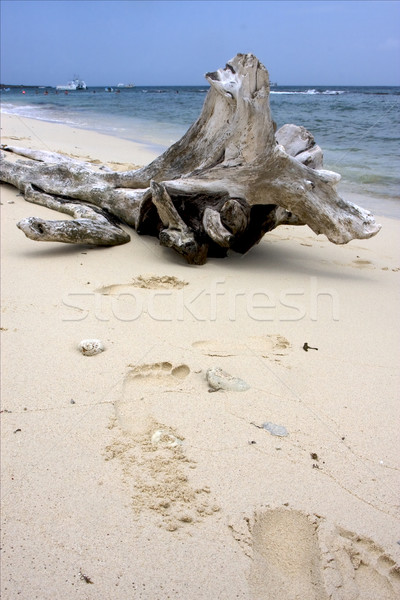 boat  people and tree in  republica dominicana Stock photo © lkpro