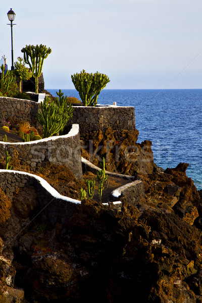 cactus street lamp chain hill coastline lanzarote  Stock photo © lkpro