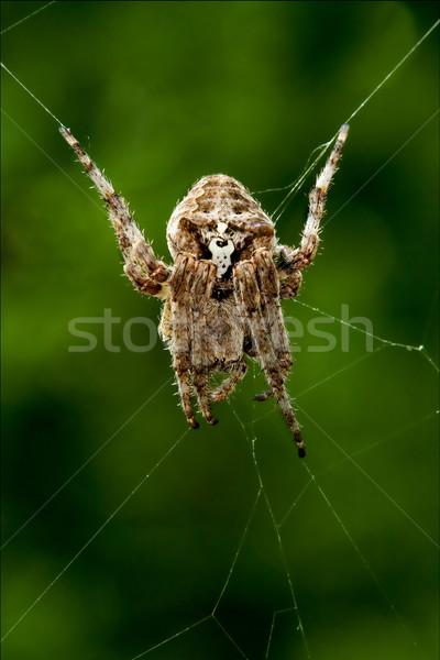Сток-фото: веб · Spider · черный · белый · лапа