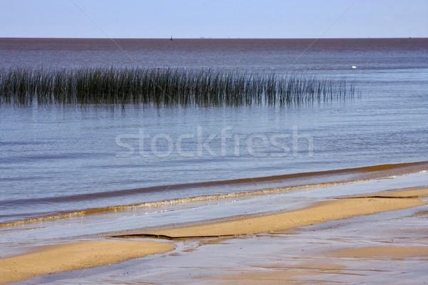 beach and grass in rio de la plata Stock photo © lkpro