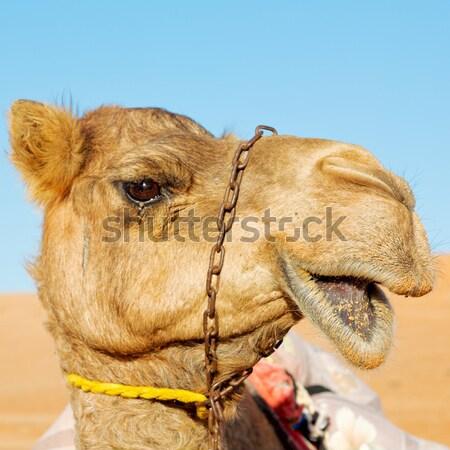 Kameel woestijn man groene zwarte wolk Stockfoto © lkpro