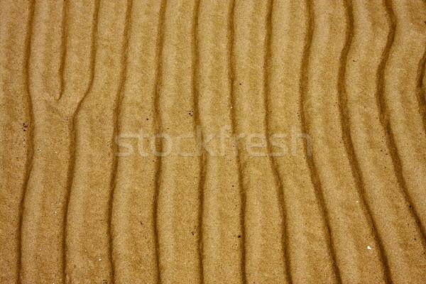 shore texture  in  uruguay Stock photo © lkpro