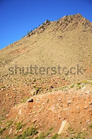谷 アトラス アフリカ 地上 ツリー 誰も ストックフォト © lkpro