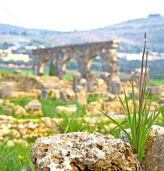 volubilis in morocco africa the old roman deteriorated monument  Stock photo © lkpro