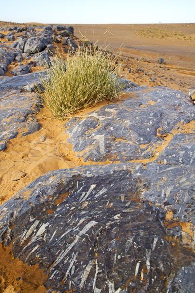 öreg kövület sivatag Marokkó bokor Szahara Stock fotó © lkpro