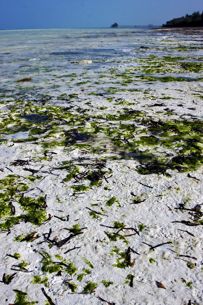 seaweed and coastline Stock photo © lkpro