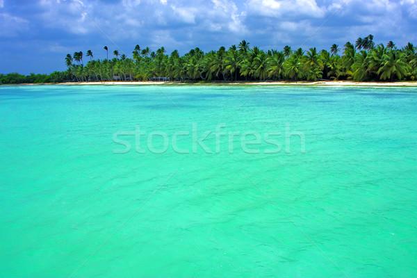 Kustlijn boom strand hemel natuur zee Stockfoto © lkpro