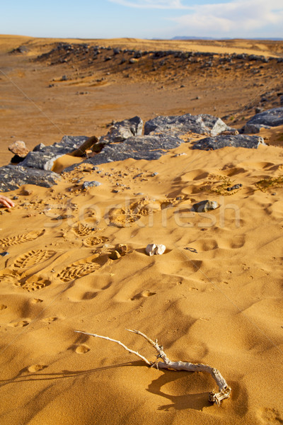 old fossil in  the desert of morocco footstep Stock photo © lkpro