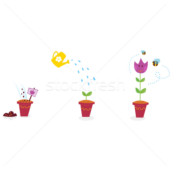 Garden Flowers Growth Stages - Tulip  Stock photo © lordalea