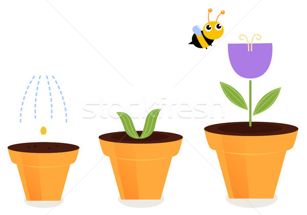 Flower in pots growth stages isolated on white ( tulip ) Stock photo © lordalea
