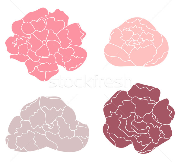 Peony pastel flower set isolated on white Stock photo © lordalea