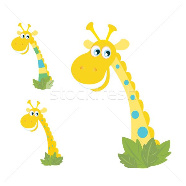üç sarı zürafa yalıtılmış beyaz karikatür Stok fotoğraf © lordalea