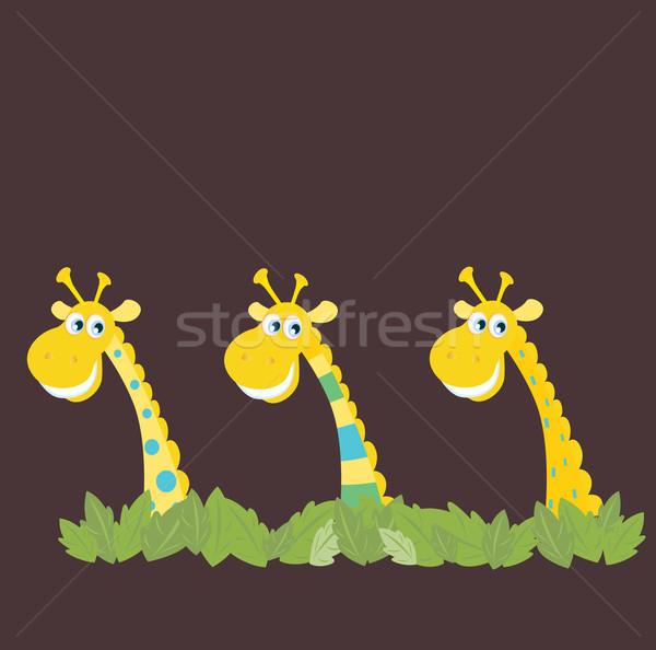 üç Afrika safari zürafalar sarı arkasında Stok fotoğraf © lordalea