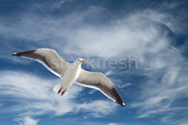 Repülés sirály drámai égbolt felhők természet Stock fotó © lorenzodelacosta