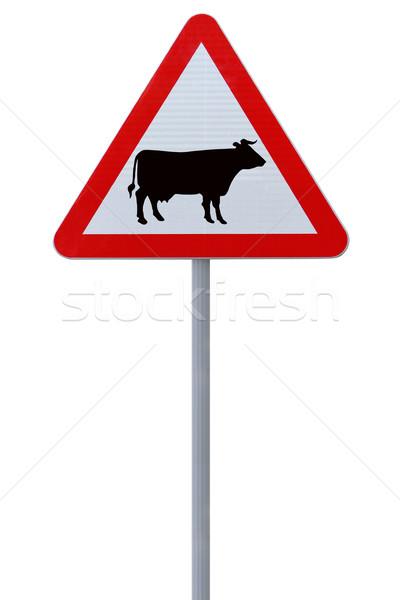 Szarvasmarha felirat izolált fehér tehén piros Stock fotó © lorenzodelacosta