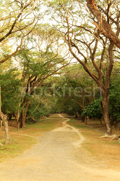 Tranquil Pathway  Stock photo © lorenzodelacosta