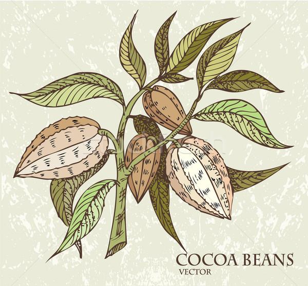 食品 葉 健康 チョコレート 果物 ストックフォト © lossik