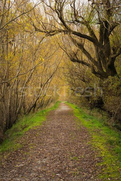 Na północ Nowa Zelandia drewna lasu krajobraz zielone Zdjęcia stock © lostation