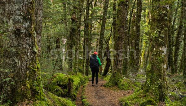 Woman hiker is enjoying the kepler track Stock photo © lostation