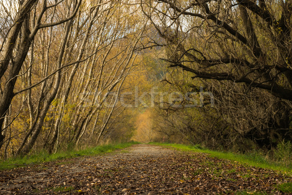 boardwalk/path traverses wetlands Stock photo © lostation