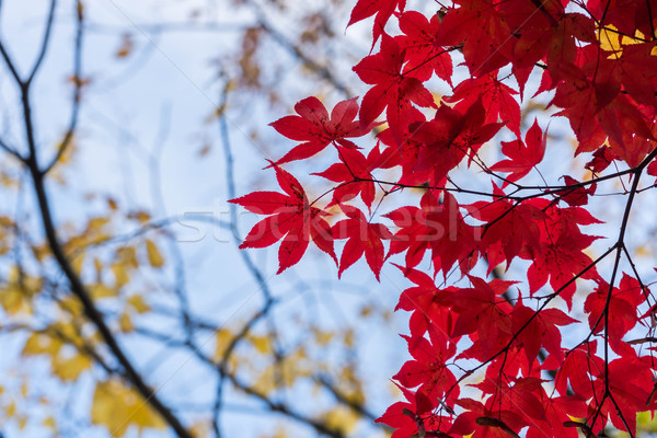 Leaves and trees autumn fields fall Stock photo © lostation