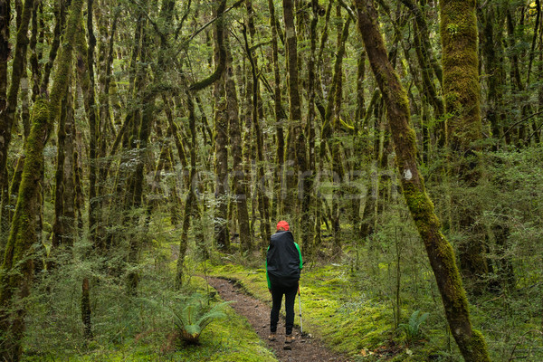 woman hiker at Kepler track Stock photo © lostation