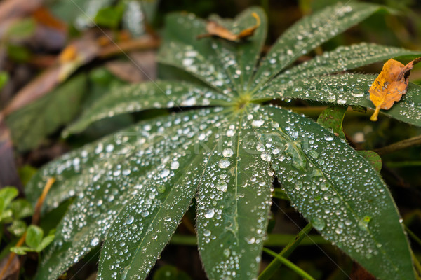 gleen leaves with water drops Stock photo © lostation