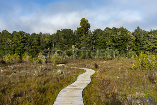 Path along the Kepler track Stock photo © lostation