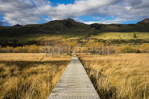 boardwalk/path traverses wetlands Stock photo © lostation