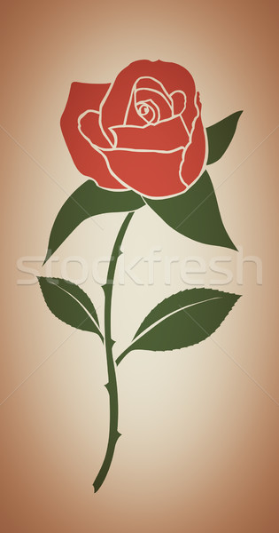 Single red rose Stock photo © lostation