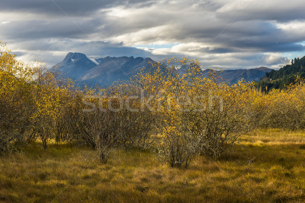 landscapes trees autumn fields fal Stock photo © lostation