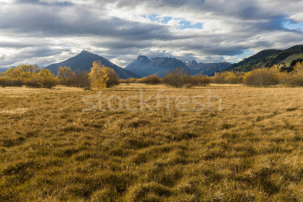 landscapes trees autumn fields fall Stock photo © lostation