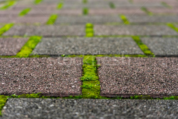 Brick pathway with green moss  Stock photo © lostation