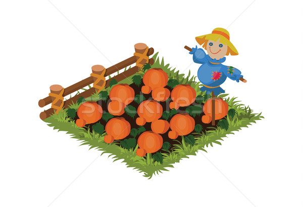 Isometric Cartoon Vegetable Scarecrow Garden Bed Planted with Pumpkins Stock photo © Loud-Mango