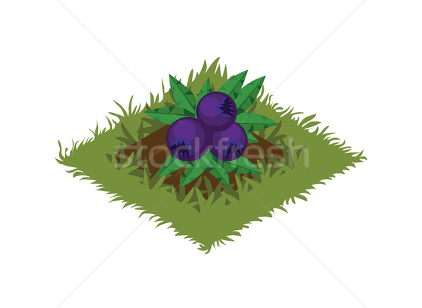 Isometric Cartoon Fruit Garden Bed with Berry Bush Plant - Tileset Map  Stock photo © Loud-Mango