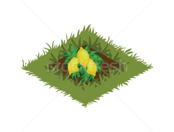 Karikatur Obst Garten Bett Zitronenbaum Stock foto © Loud-Mango