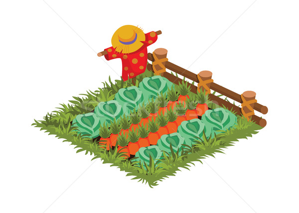 Isometric Cartoon Vegetable Garden Bed Planted with Cabbage and Carrot Stock photo © Loud-Mango