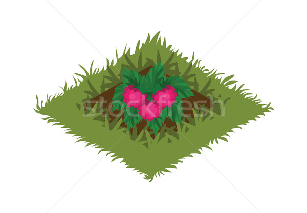 Isometric Cartoon Fruit Garden Bed Planted with Raspberry Bush Stock photo © Loud-Mango