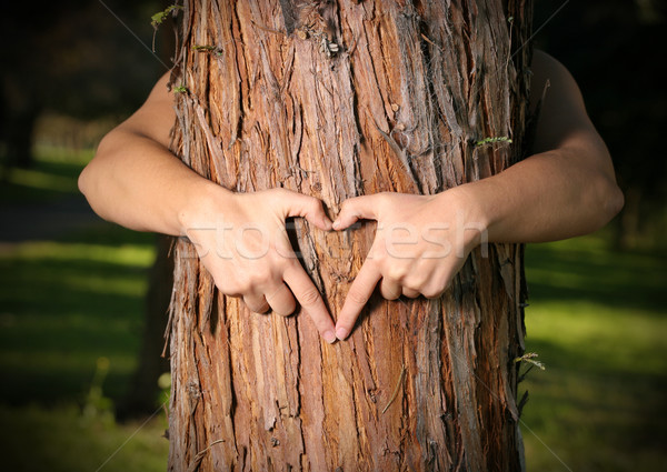 Tree Lover nature lover Stock photo © lovleah