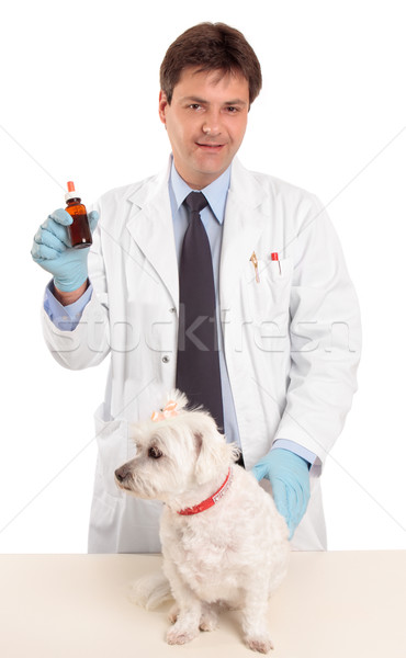 Foto stock: Veterinário · animal · de · estimação · pomada · garrafa · medicina