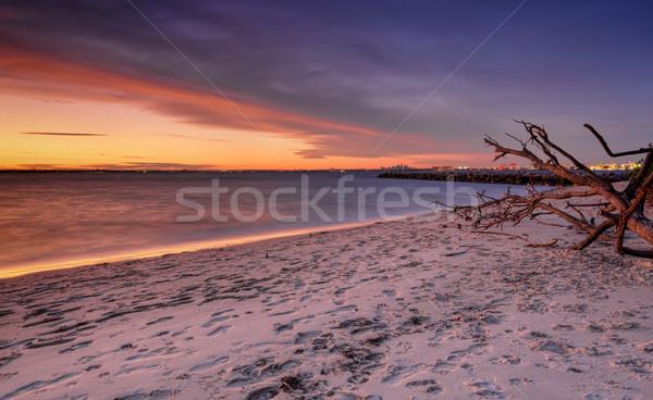 日没 銀 ビーチ 植物学 シドニー ポート ストックフォト © lovleah