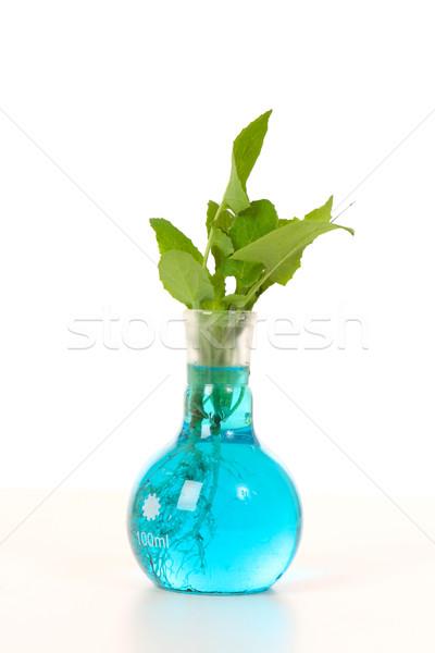 室 成長した 工場 種 成長 ソリューション ストックフォト © lovleah