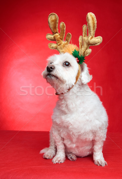 Cute puppy dog with antlers Stock photo © lovleah