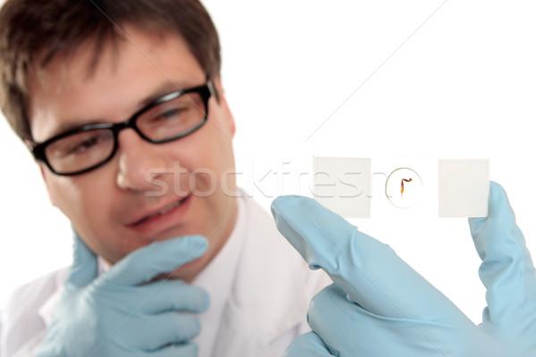 科学 思考 顕微鏡 スライド 生物学者 その他 ストックフォト © lovleah