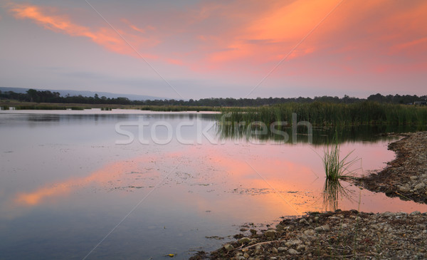 Tranquil scene Boorooberongal Lake Penrith Stock photo © lovleah