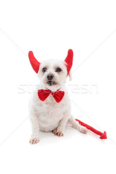 Devil Dog Stock photo © lovleah