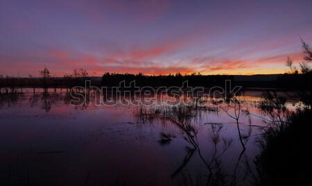 Zonsondergang kleuren schemering paars blues trillend Stockfoto © lovleah