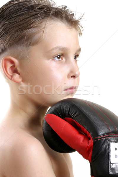 Boxer Champ Stock photo © lovleah