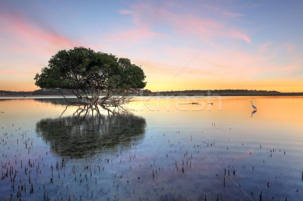 Mangrove Tree and White Egret Stock photo © lovleah